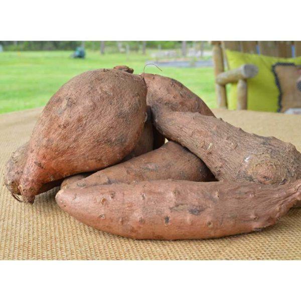 organic-local-sweet-potato